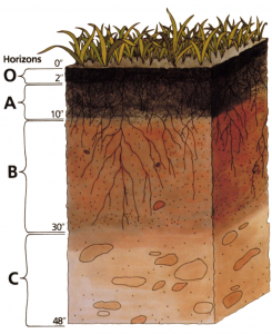 Cross section of soil layers.